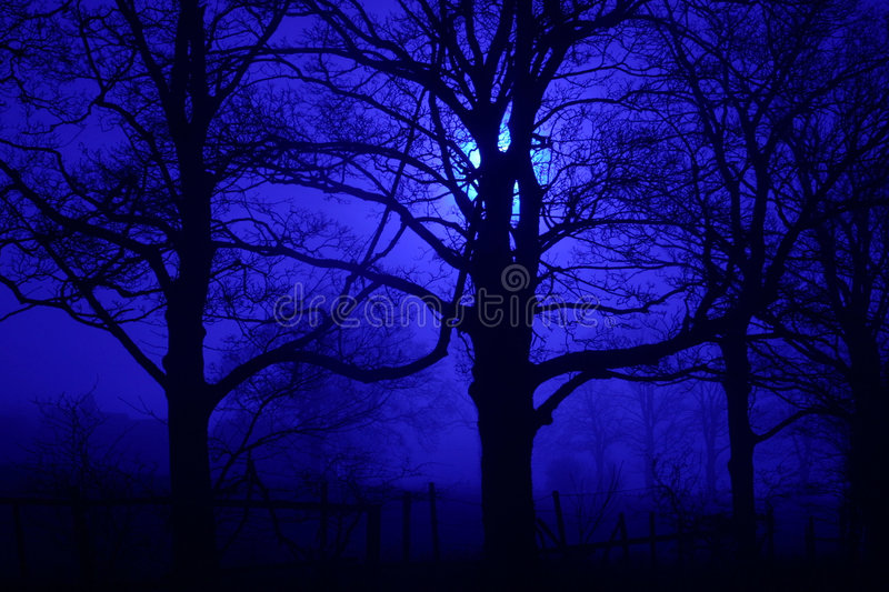 Spooky trees at night stock photography