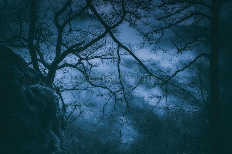 Spooky trees with scary branches at night stock photography