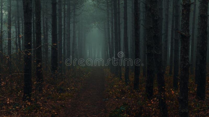 Spooky woods near Montana, Bulgaria stock photos