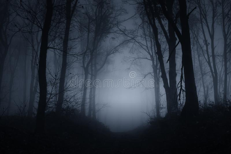 Spooky woods at night on Halloween. Spooky haunted woods on Halloween night. Mysterious forest with fog at night. Haunted forest background royalty free stock image