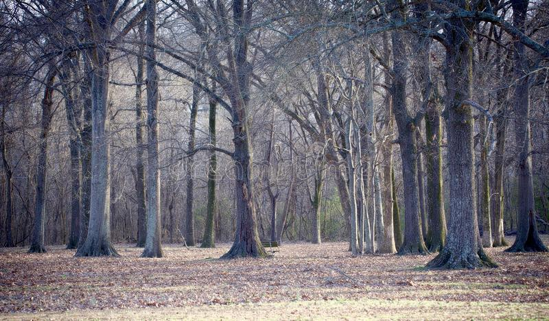 Spooky Woods Scene. A tree line of woods that look very eerie and spooky royalty free stock photo