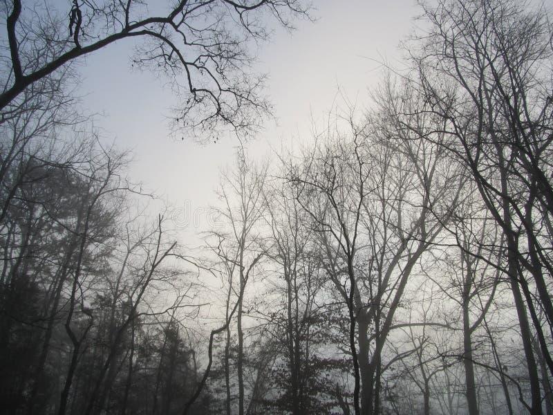 Spooky Woods2 stock photos