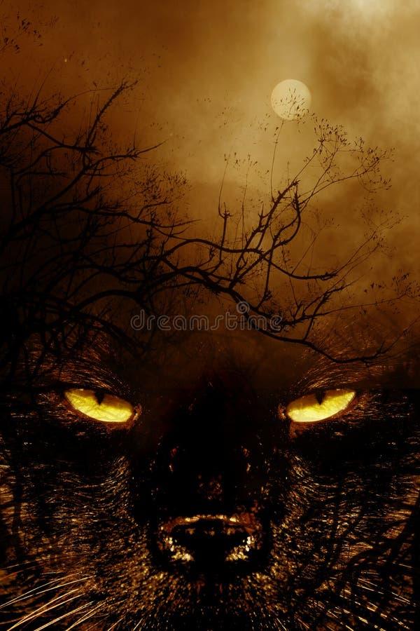 Spookycat1 photographie stock libre de droits