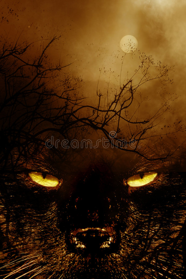 spookycat1 στοκ φωτογραφία με δικαίωμα ελεύθερης χρήσης