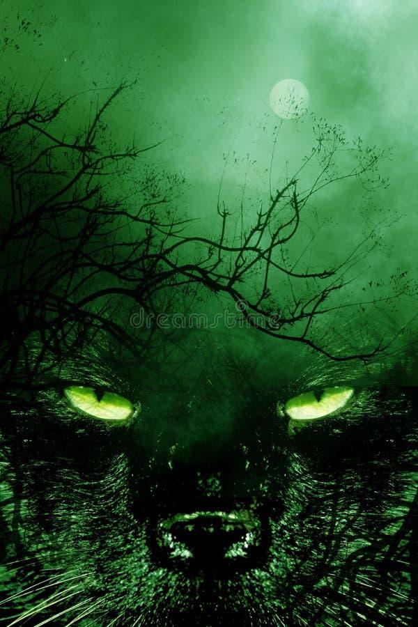 spookycat3 стоковые фото