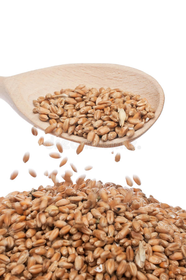 Download Spoon of wheat stock image. Image of background, food - 23494563