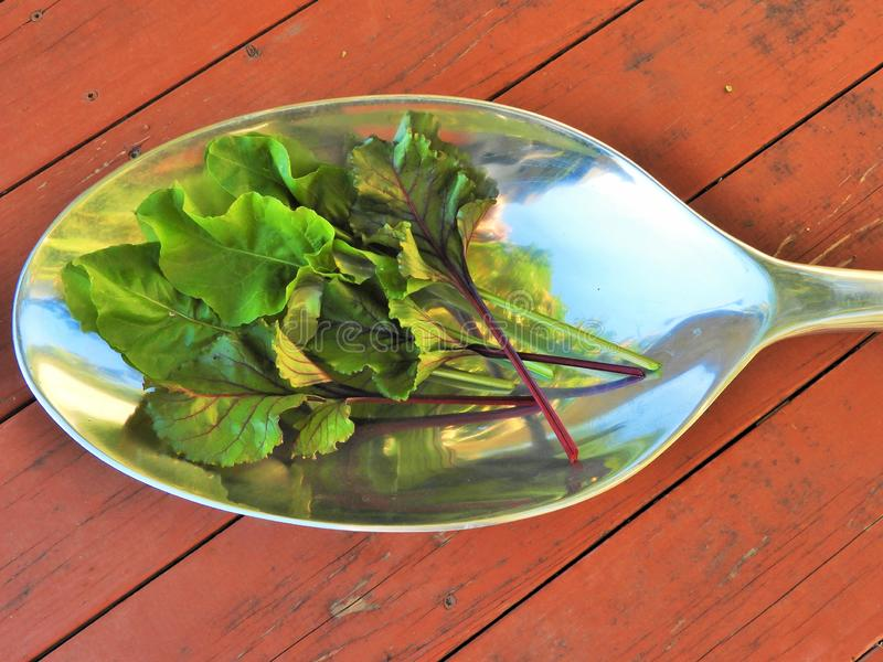 A spoonful of fresh beet greens royalty free stock image