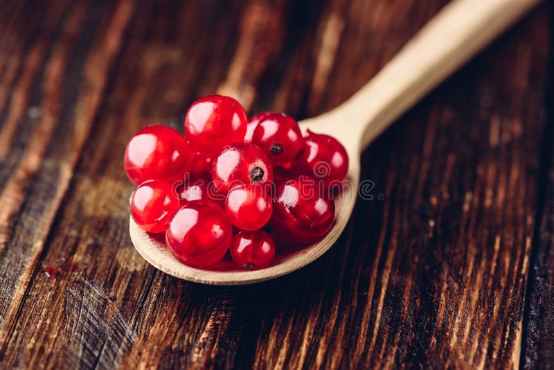 Spoonful of red currant. Over the dark wooden surface stock photography