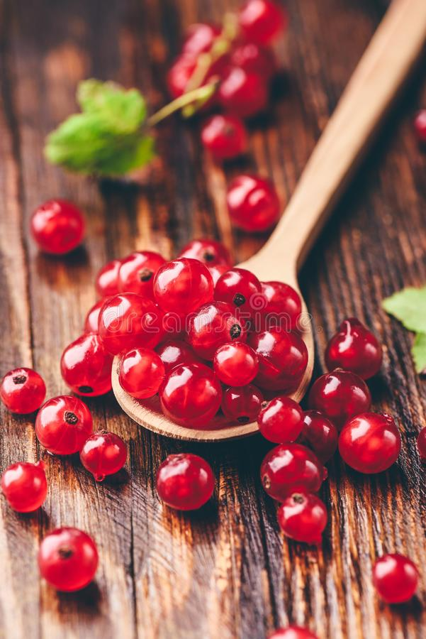Spoonful of red currant. Over the dark wooden surface stock image