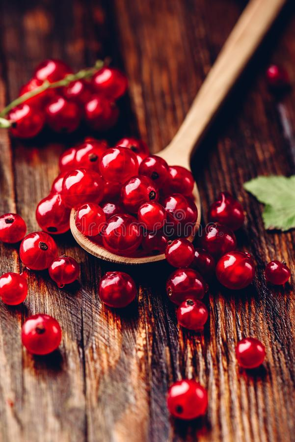Spoonful of red currant. Over the dark wooden surface royalty free stock photos