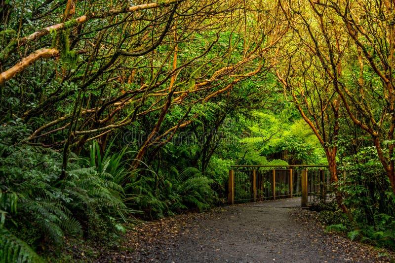 Spoor bij de Kloofdaling, het Nationale Park van Fiordland, Milford-Geluid, Nieuw Zeeland stock afbeeldingen