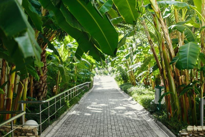 Spoor die in de afstand onder de palmen verdwijnen stock foto's