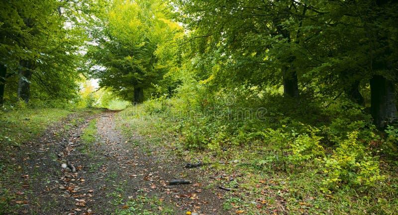 Spoor door bos stock afbeelding