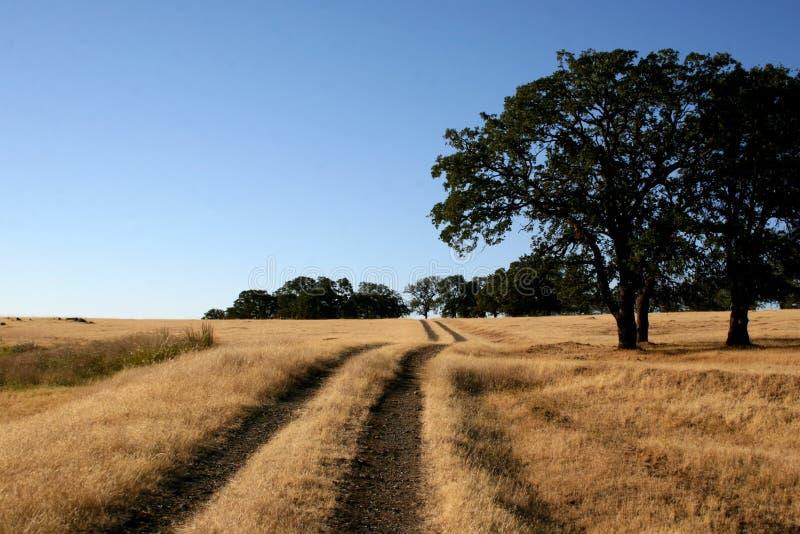 Spoor door platteland royalty-vrije stock fotografie