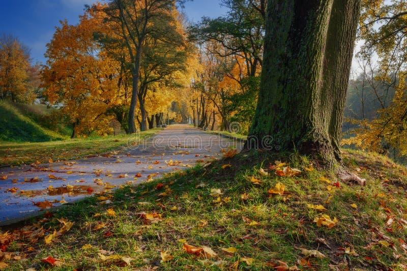 Spoor voor het lopen in de herfstbladeren stock afbeeldingen
