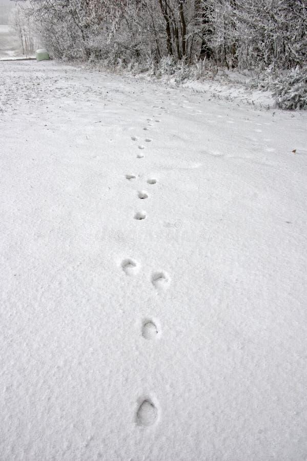 Spoors van een Hert in Sneeuw royalty-vrije stock fotografie