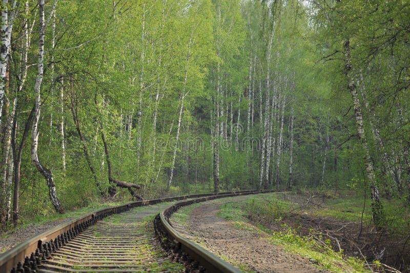 Spoorweg in een bos royalty-vrije stock afbeelding