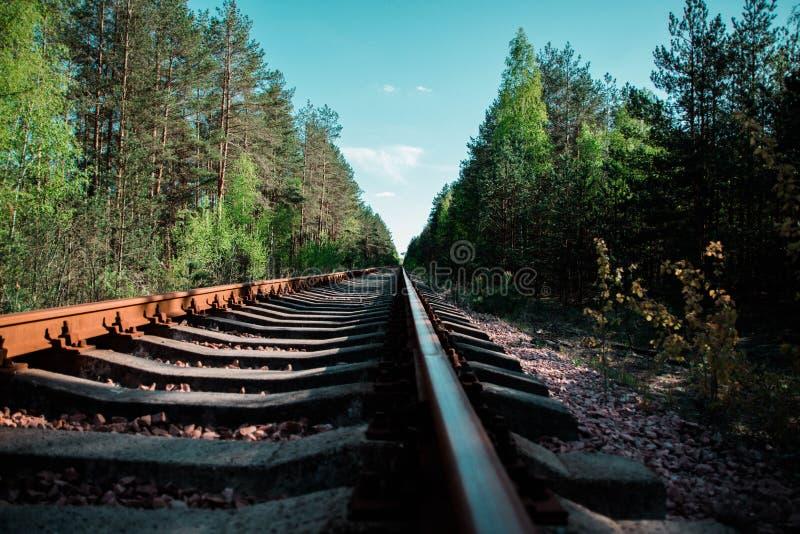 Spoorweg in het bos stock fotografie