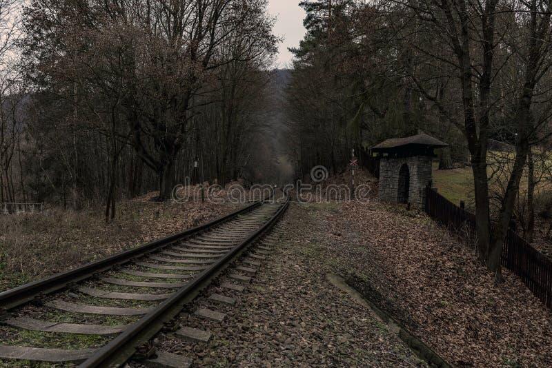 Spoorwegsporen die door een dicht bos leiden stock fotografie