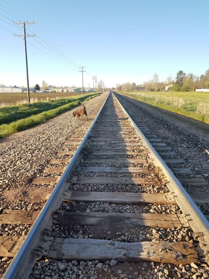 Spoorwegsporen die in ver leiden stock foto's