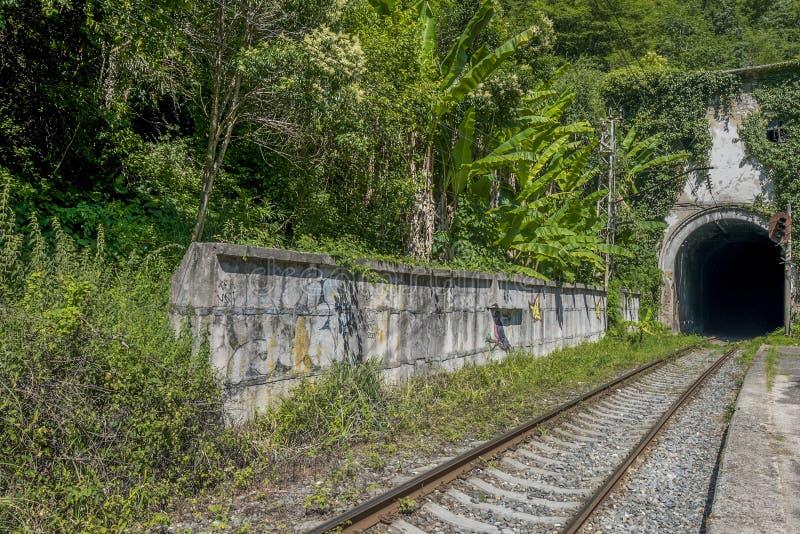Spoorwegtunnel in de zomerbos royalty-vrije stock fotografie