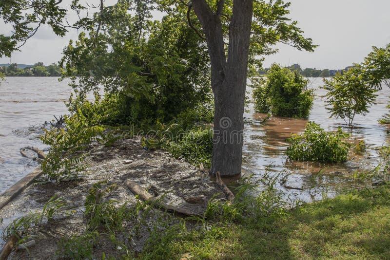 Sporcizia e rifiuti e detriti dal fiume sommerso preso e giudicato sul posto e galleggiando sull'acqua vicino alla riva - fuoco s immagine stock