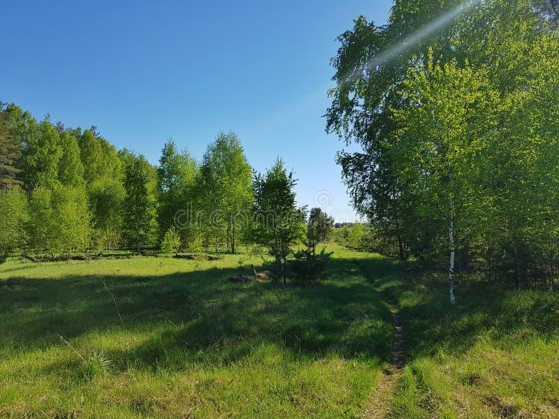 Sporen in het hout De de lente bos Mooie lente stock foto