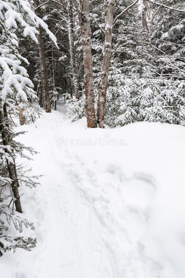 Sporen in het snowshoeing van sleep in een nationaal park in Canada stock afbeeldingen