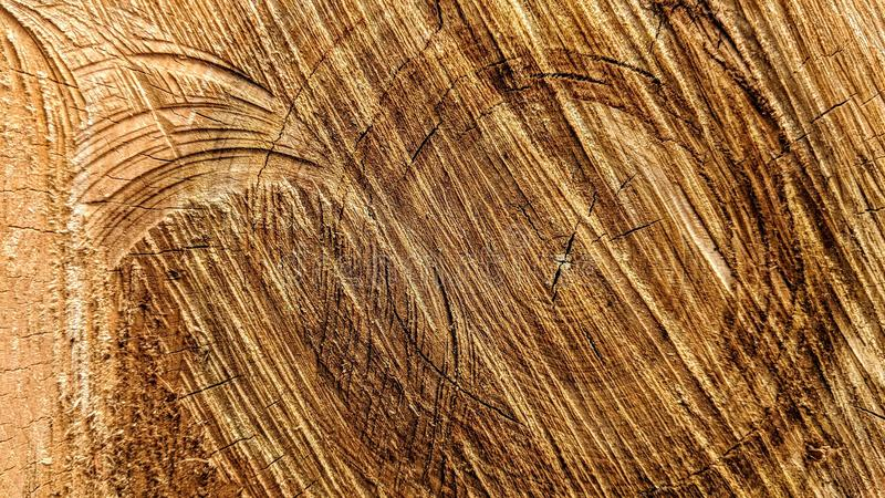 Sporen van besnoeiingen op een boomstam stock afbeelding