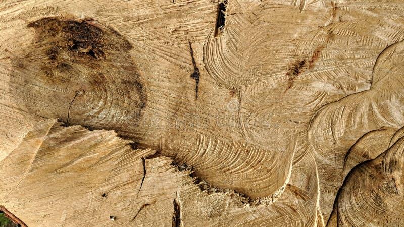 Sporen van besnoeiingen op een boomstam royalty-vrije stock foto's