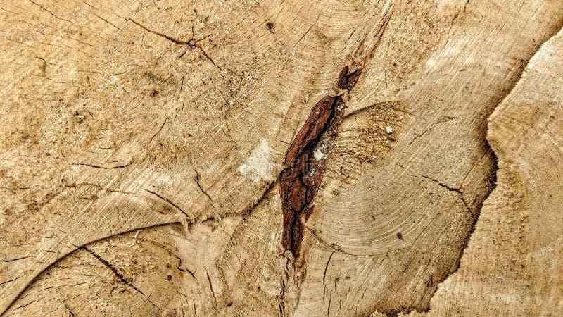 Sporen van besnoeiingen op een boomstam royalty-vrije stock fotografie