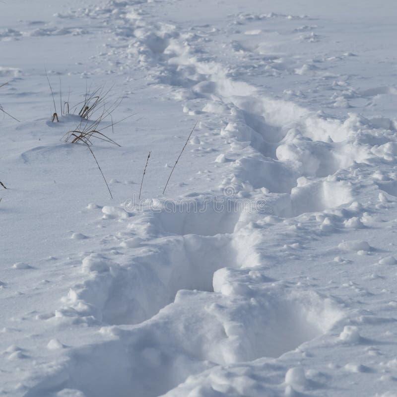Sporen van een mens die net door diepe sneeuw heeft overgegaan stock afbeeldingen