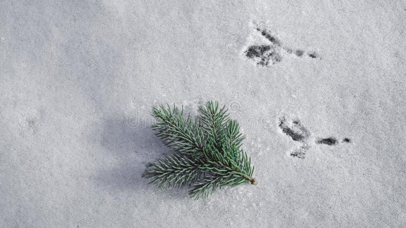 Sporen van een vogel op de verse sneeuw stock fotografie