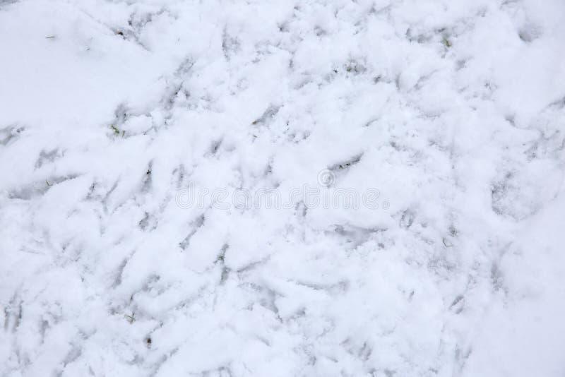 Sporen van vogelsvoeten op verse sneeuw stock afbeelding