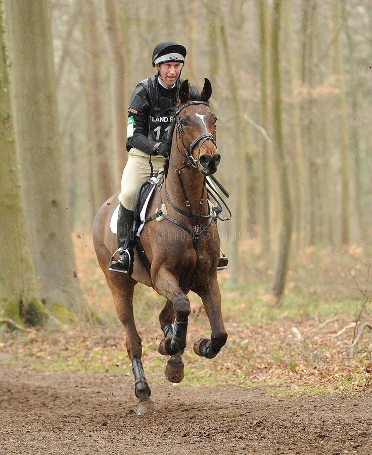 Sport équestre, cheval galopant image libre de droits