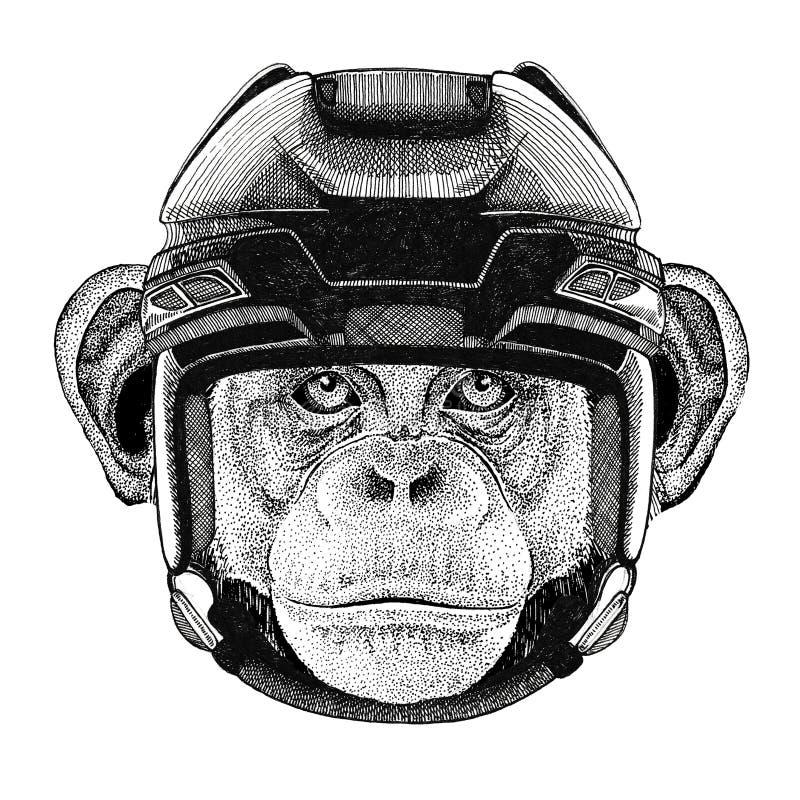 Sport animal de port d'hockey de sport d'hiver de sport de casque d'hockey d'animal sauvage d'image d'hockey de singe de chimpanz illustration stock