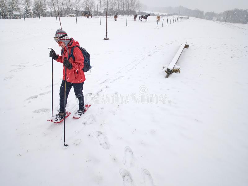 Sport body woman is hiking at horse farm with snowshoes royalty free stock photos