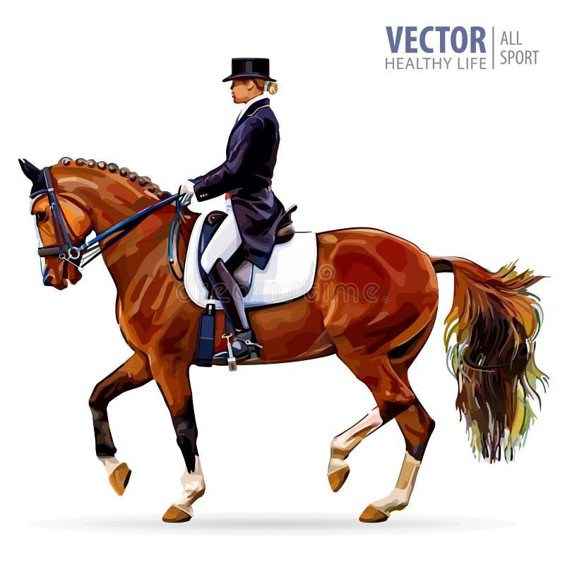 Sport equestre Puleggia tenditrice dell'amazzone in cavallo da equitazione uniforme all'aperto dressage Isolato su priorità bassa illustrazione di stock