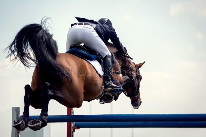 Sport equestri immagine stock