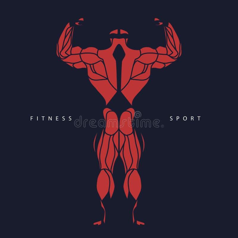 Sport, forma fisica, muscolo, culturista, uomo, siluetta, illustrazione di stock