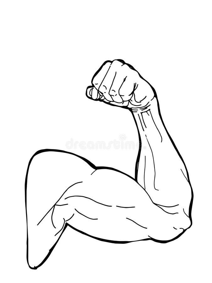 Sport man muscular strong arm illustration drawing line illustration. Sport man muscular strong arm illustration drawing line white background vector illustration