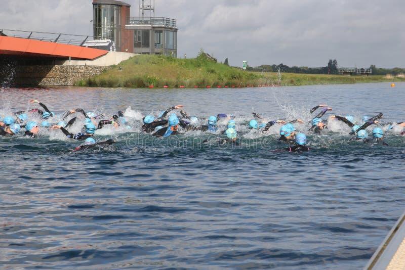 Sport triathlon swimming. Swimming triathletes at the start of a triathlon at Dorney Lake, England stock photos