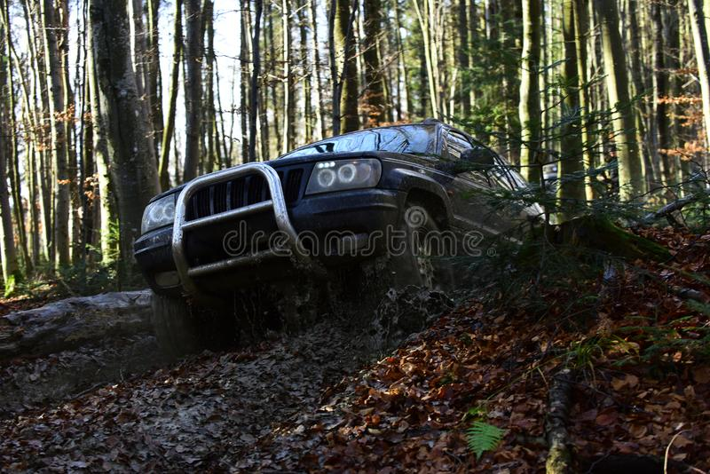 Sport utility vehicle or SUV overcomes obstacles. Motor racing in autumn forest Offroad race on fall nature background. Sport utility vehicle or SUV overcomes royalty free stock photo
