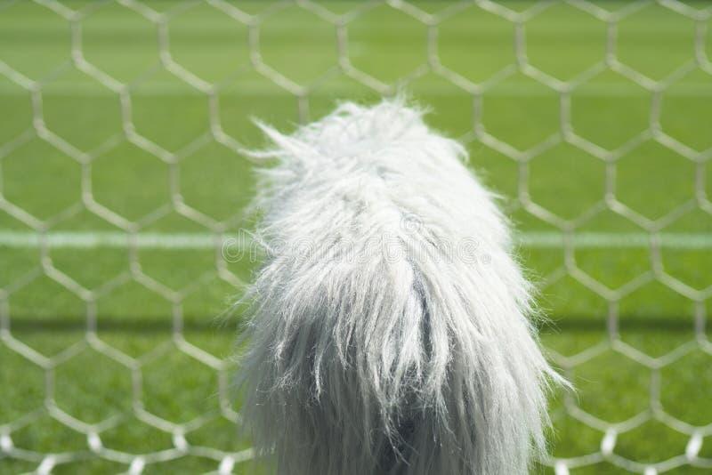 Sporta zawodowego mikrofon na boisku do piłki nożnej za fotografia stock