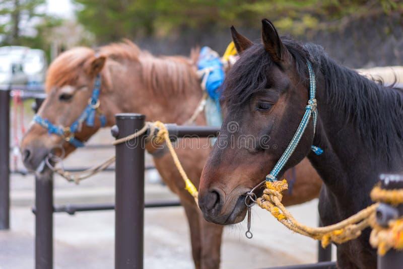 Sportenpaarden voor het rennen in de boxen royalty-vrije stock foto