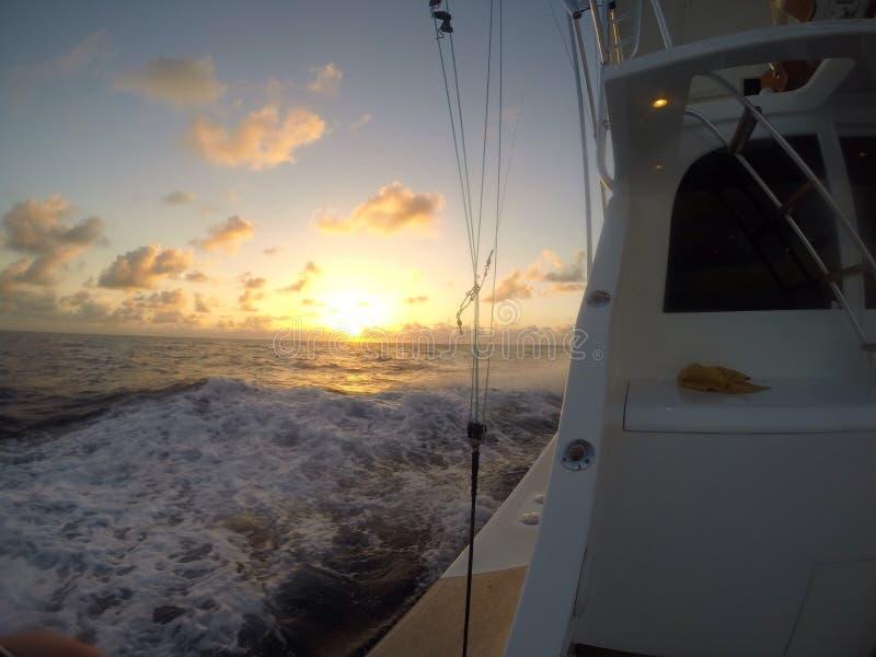 Sportfish стоковая фотография rf