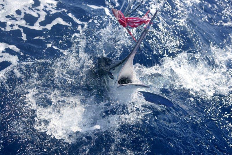 sportfishing white för atlantisk stor modig marlin royaltyfri fotografi