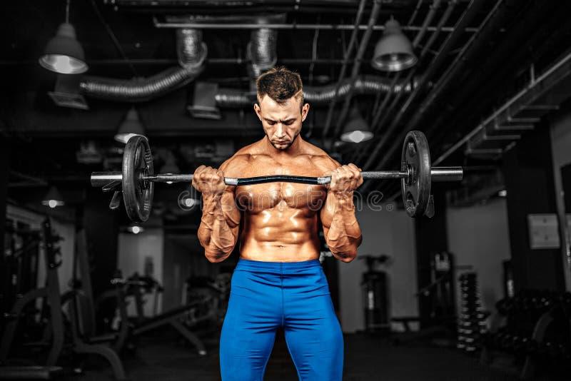 Sportif de Bodybuilder établissant avec un barbell dans le gymnase, faisant la formation de biceps photos libres de droits
