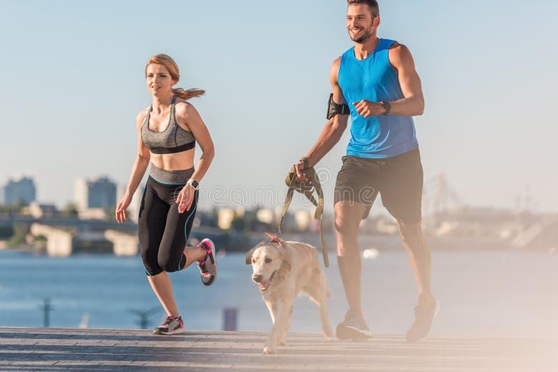 Sportive et sportif pulsant avec le chien images libres de droits