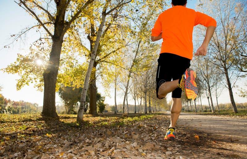 Sportmann mit dem starken Kalbmuskel, der draußen in weg von Straßenspur läuft, rieb mit Bäumen unter schönem Herbstsonnenlicht stockfotos